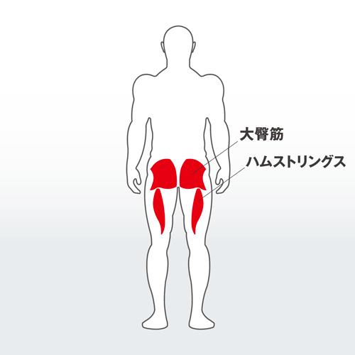 pectoralis_major_muscle