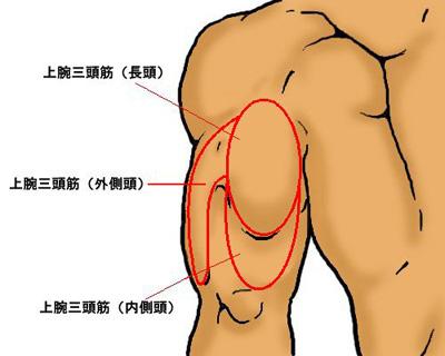 上腕三頭筋の筋トレ。ダンベル、マシンのメニューや鍛え方。